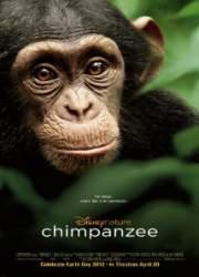 Watch Chimpanzee